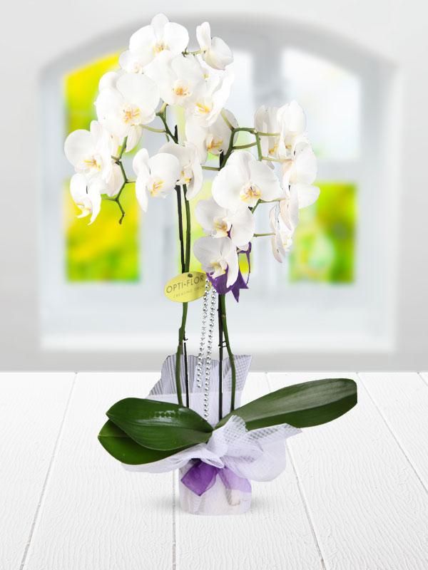 Adana İçin çifit dallı beyaz orkide