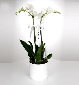 Adana İçin Beyaz Seramikte Çiftli Orkide