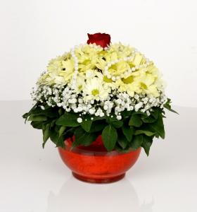 Cam Akvaryumda Kır çiçekleri ve Gül