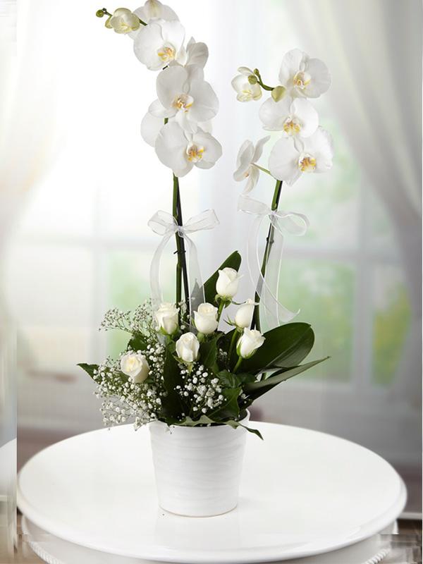 2 dallı + 7 güllü beyaz orkide