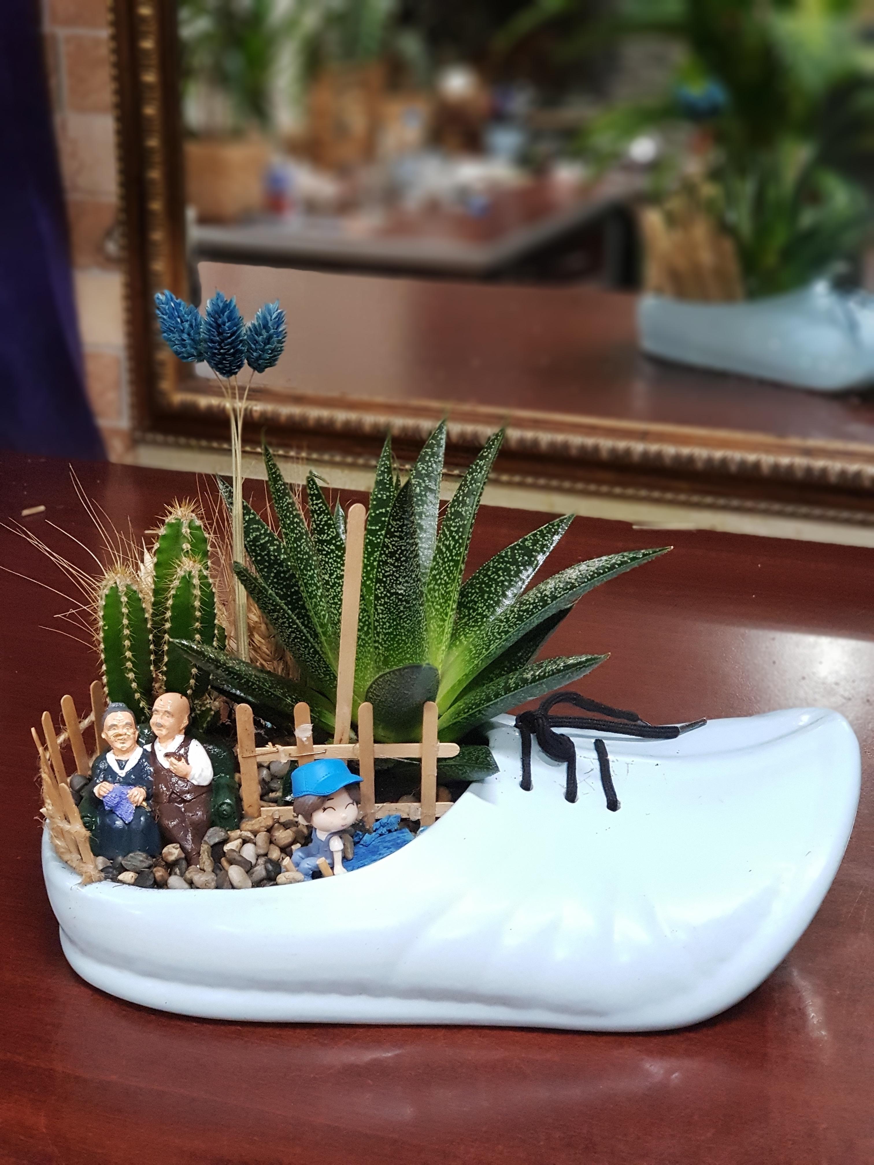 Seramik Ayakkabıda Skulent Terrerium